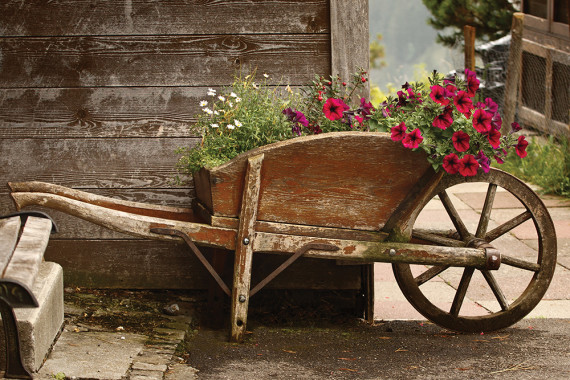 The Thriller, Filler and  Spiller of Container Gardening