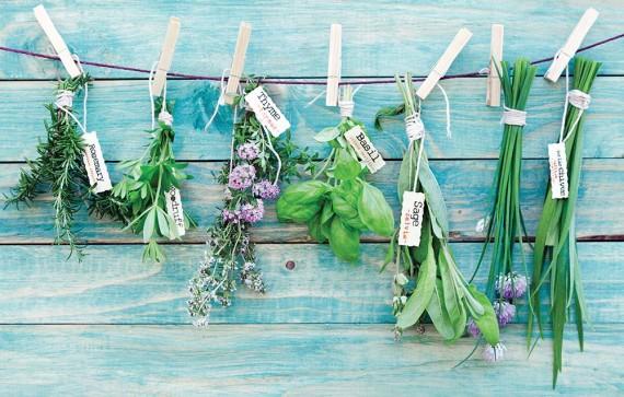 Growing your own herbs is a gratifying  gateway to gardening